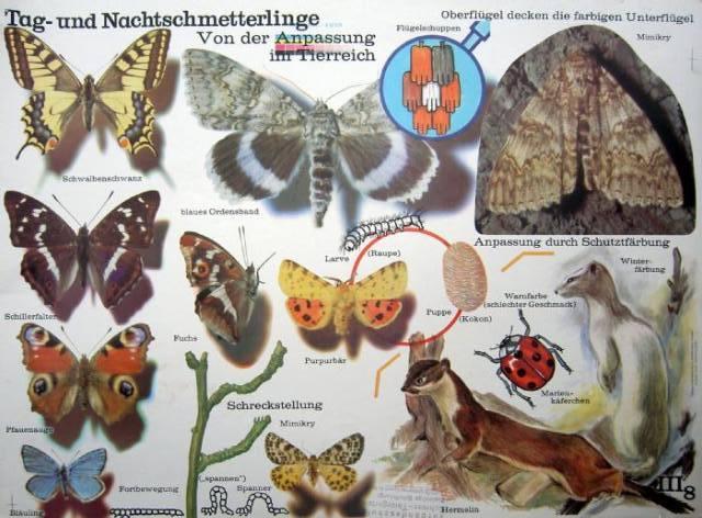 Affiche de papillons de l'époque de la RDA dans le magasin Veb Orange à Berlin.